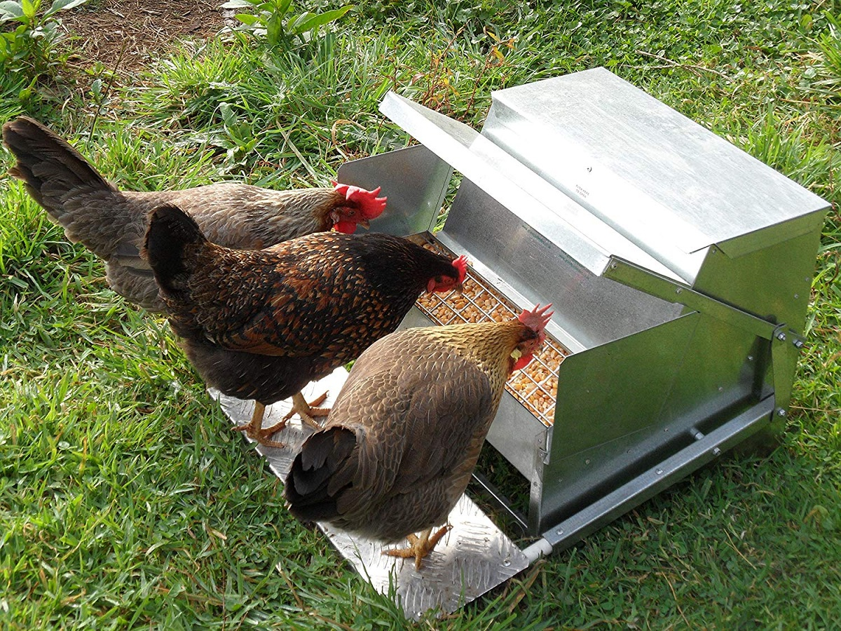 Chicken Feeders-Waterers